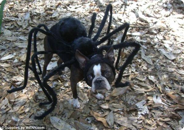 Необычные костюмы для собак