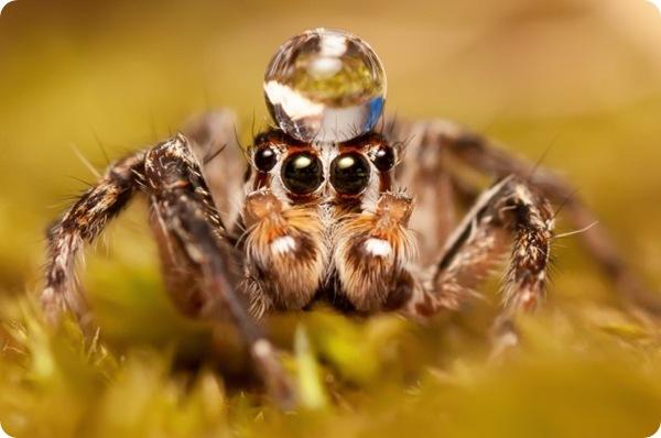 Фотографии насекомых Алехандро Феррера