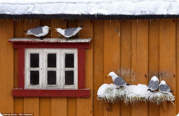 Животный мир Северной Европы от Дэнни Грина