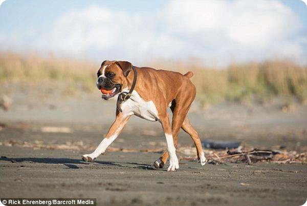 Пёс Чарли и его любимый мячик