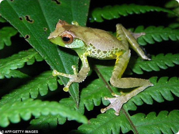 В бассейне реки Меконг обнаружены новые виды животных