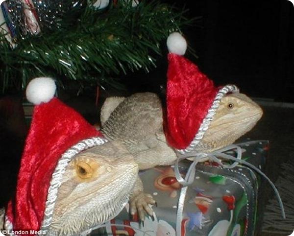 Рождественские фотографии животных