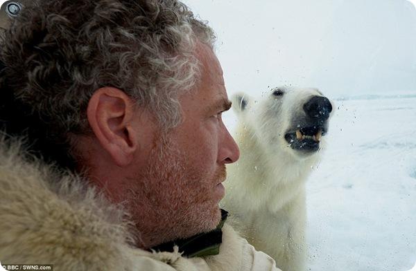 Фотограф против медведя!