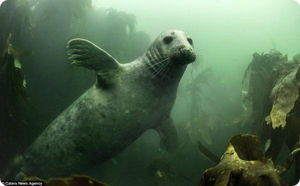 Такие зубастые, но очень дружелюбные тюлени
