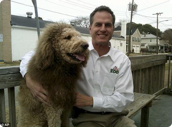 Собака или лев?!