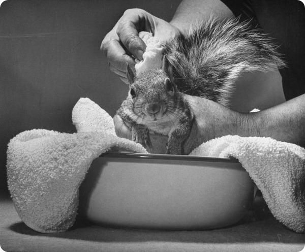 Томми Такер – белка-фотомодель