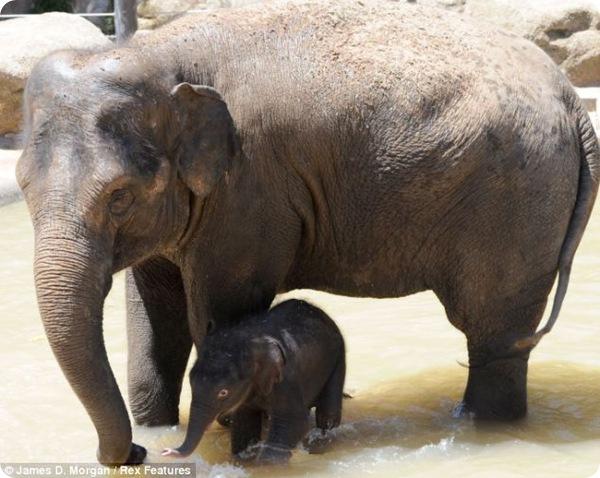 Слонёнок против жары