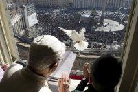 Голубь мира и враждебная чайка