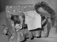 Томми Такер – первая белка-фотомодель