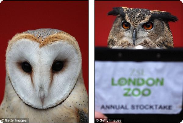 В зоопарке Лондона - перепись животных