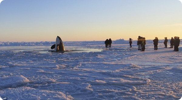 В ледяном плену