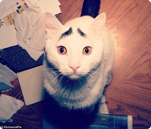 Кот с бровями!
