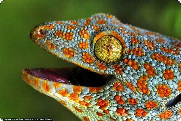 Красочный мир дикой природы