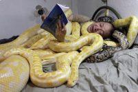 Эммануэль Тангко и его змеи