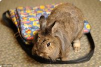 Крольчиха-путешественница по кличке Нара
