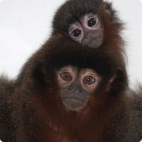 Новое пополнение в зоопарке Белфаста
