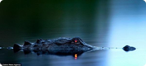 Дьявольский взгляд из темноты
