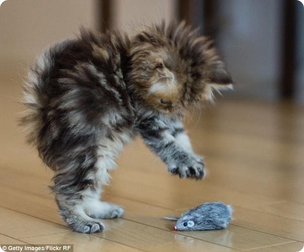 Котёнок Дейси - звезда интернета!