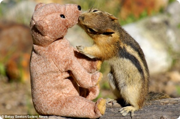 Бурундучок и плюшевый медведь