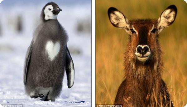 Фотографии животных ко дню всех влюблённых