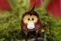 Шесть удивительных орхидей, похожих на животных