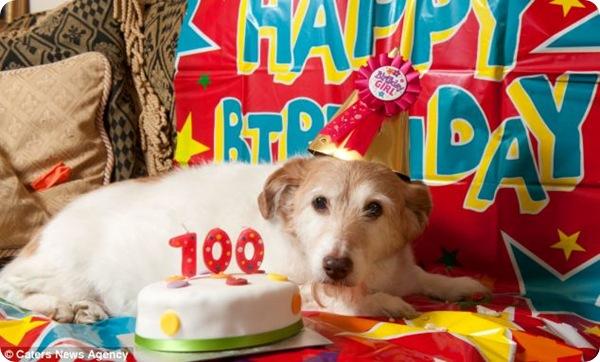 Дейзи - самая старая собака Великобритании
