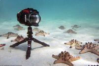 Забавное видео с морскими звёздами