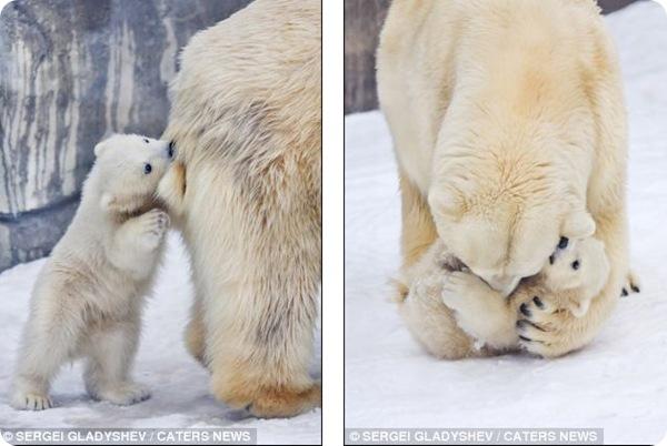 В материнских объятиях