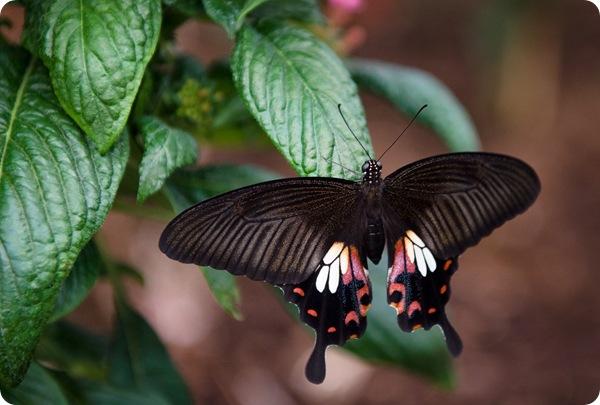 Уникальная выставка бабочек в Лондоне