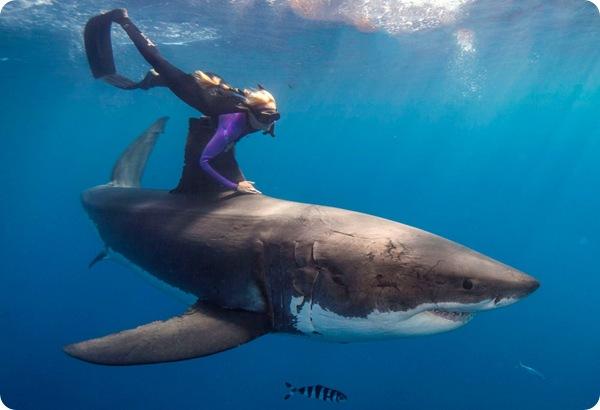 Блондинка, плавающая с акулами!