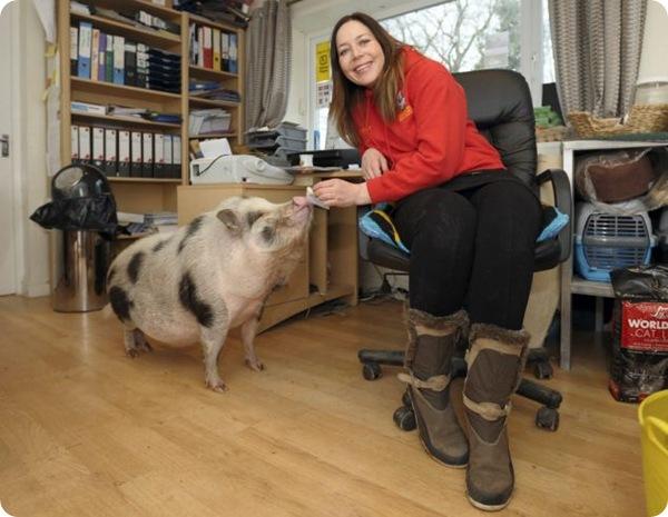 Свинья, которая считает себя собакой!