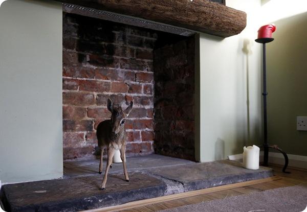 Домашняя антилопа по кличке Алуна