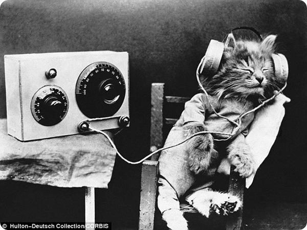 Уникальные чёрно-белые фотографии кошек