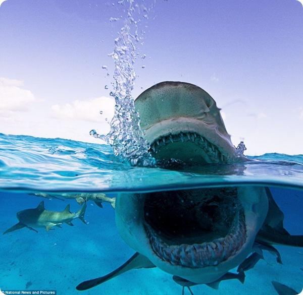 Зловещие акулы-мако