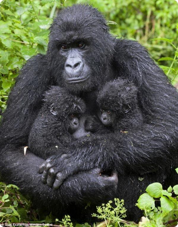 Двойня из Руанды
