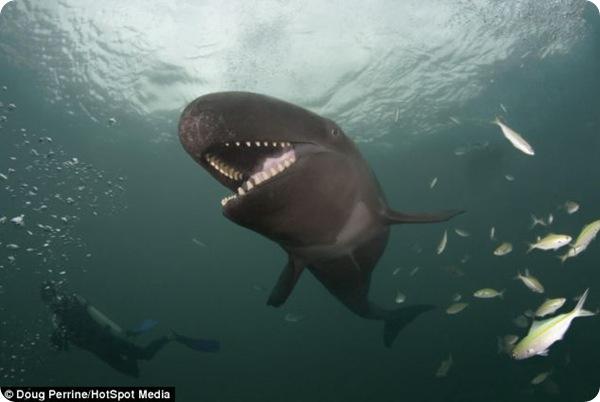 Улыбающийся кит