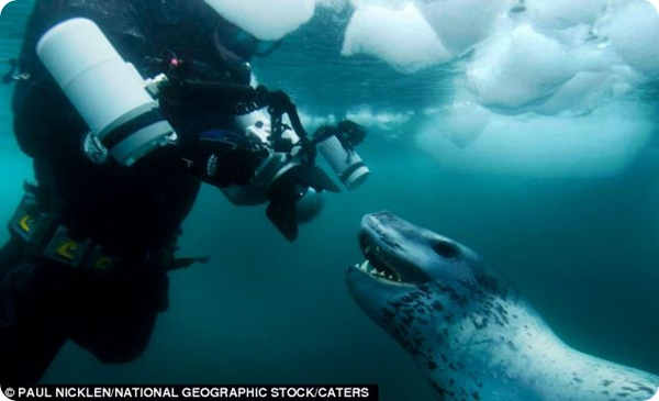 Встреча с морским леопардом