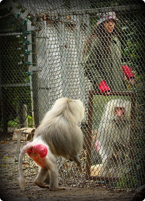 Зеркальный тест у животных