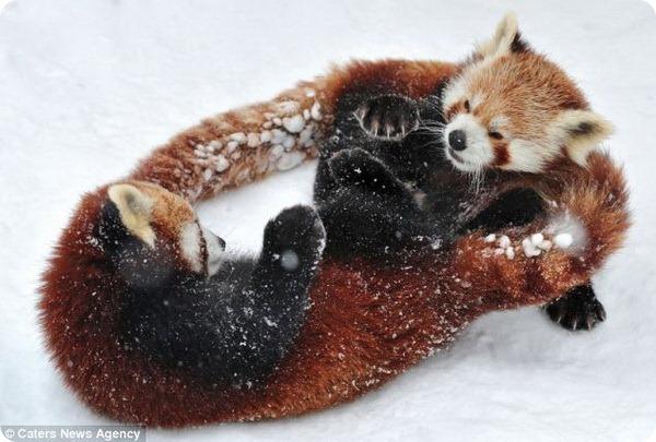 Спарринг на снегу