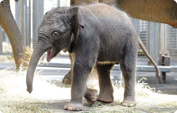 Слоненку из Мельбурна дали имя