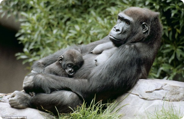 Материнская любовь в животном мире