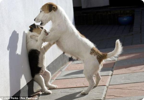 Склока в собачьей семье