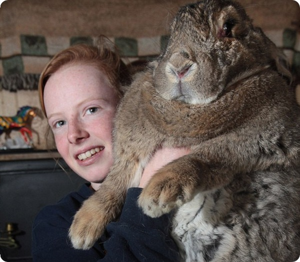Самый большой в мире кролик!