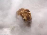 Медведи Кроноцкого заповедника