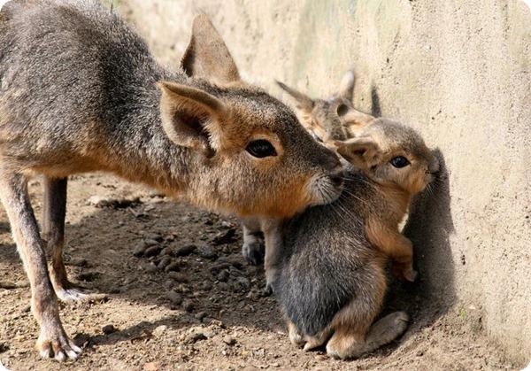 Новое поколение мар в Artis Royal Zoo