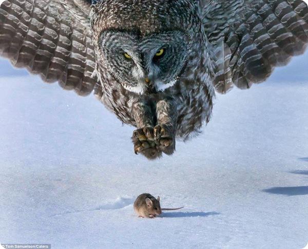 Последние мгновения жизни маленькой серой мышки!