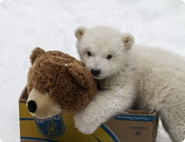 Белому медвежонку Кали нашли новый дом