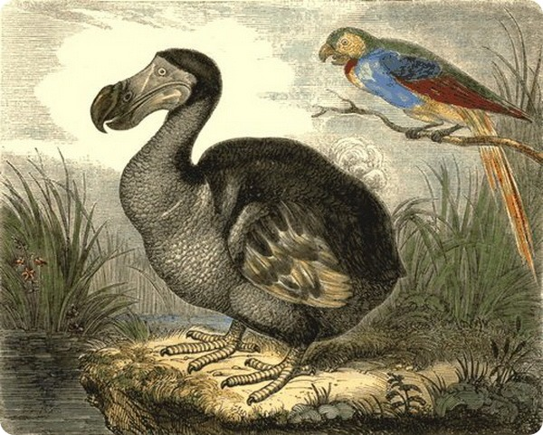 Дронт или Птица Додо (лат. Raphinae)