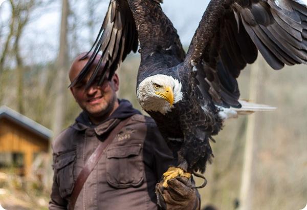 Парк хищных птиц Greifvogelpark