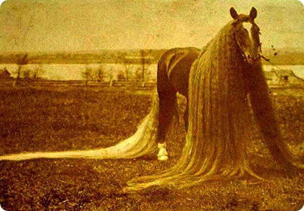 Линус - длинногривый чудо-конь